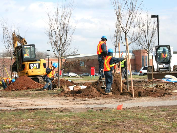 Approximately 1,550 new trees will be planted on the College of Staten Island's 204-acre campus.