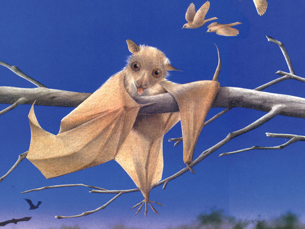 The CSI CFA will host Stellaluna, the story of a baby bat who begins to question her true identity.